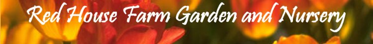 Red House Farm Garden and Nursery - Click to return home...